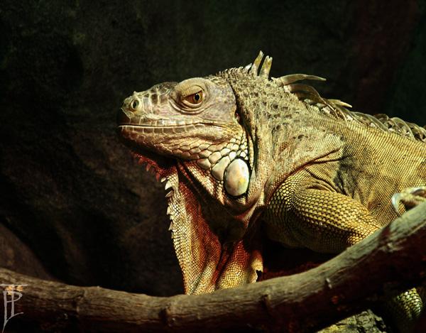 akvariet